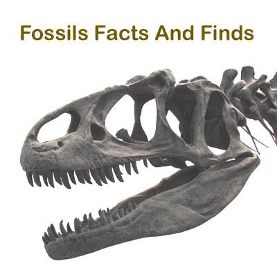 The Cenozoic Era The Age of Mammals The Last 65 Million Years