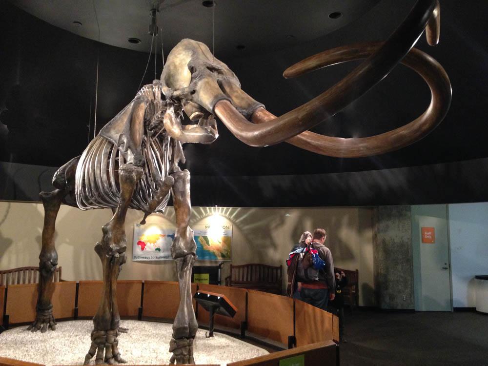 columbian mammoth from the La Brea Tar Pits
