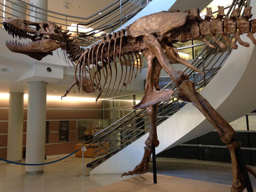 t-rex from UCMP