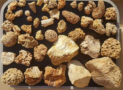 Beautiful fossilized ancient corals