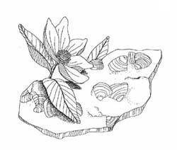 Cretaceous Flower