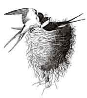 Swallows Nest