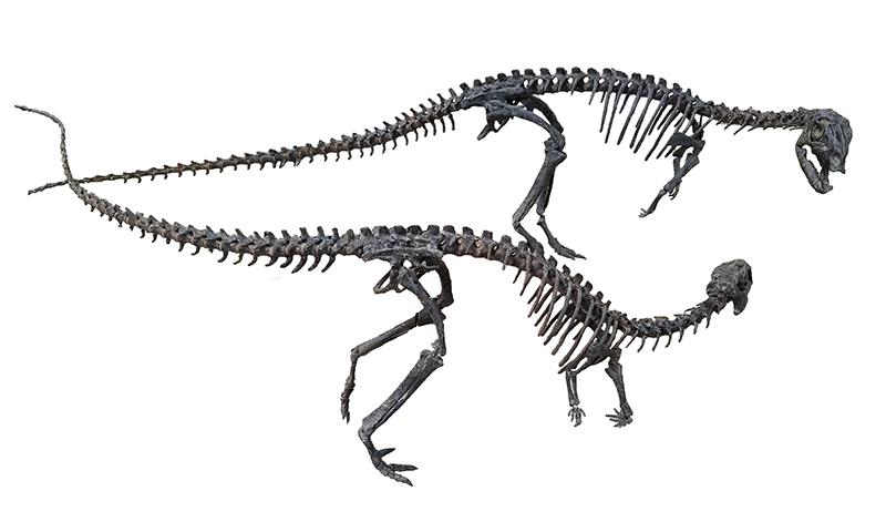 Dryosaurus fossil bones