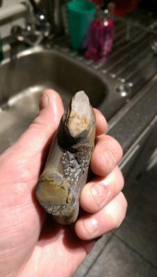 Fossil Bone, UK