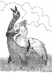 killer birds in the Cenozoic Era