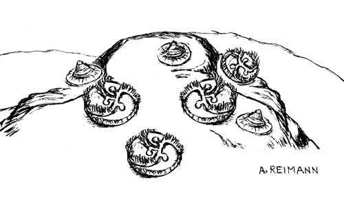 cyclomedusa and tribrachidium