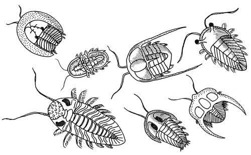 Trilobite Species
