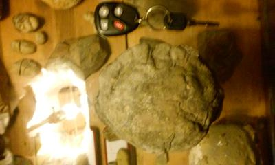 Fossil Turtle Shell?