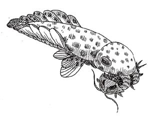 anomalocaris, Cambrian Period hunter
