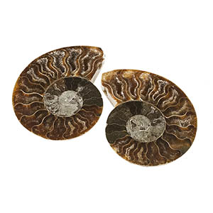 Madagascar ammonite split