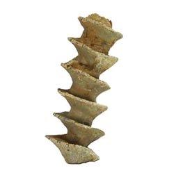 archimedes bryozoan fossils