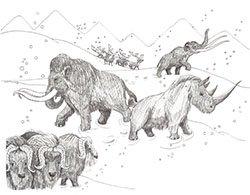 Cenozioc Mammals