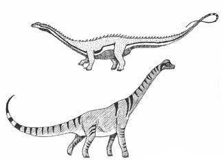 sauropods Jurassic Period