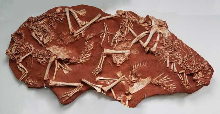 oviraptor bones