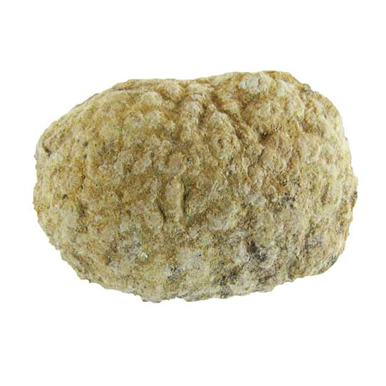 fossil sponge from the Permian Period