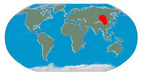 Oviraptor Fossil Location