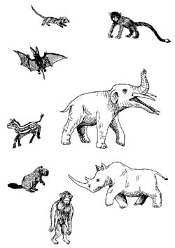 paleogene mammals