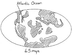 Paleogene continents