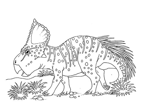 Protoceratops Drawing