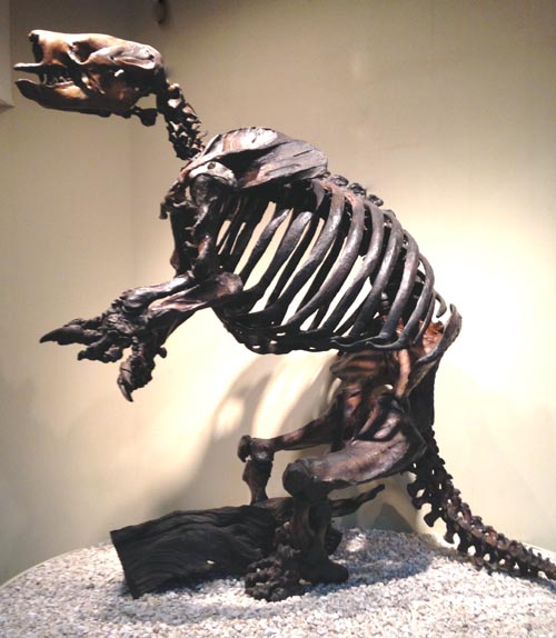 ground sloth from the La Brea Tar Pits