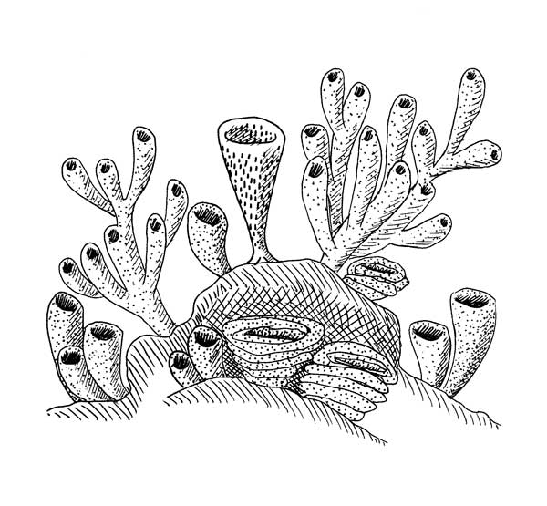 fossil sponges