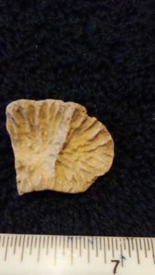 shell imprint?
