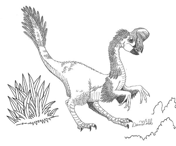 Oviraptor Drawing